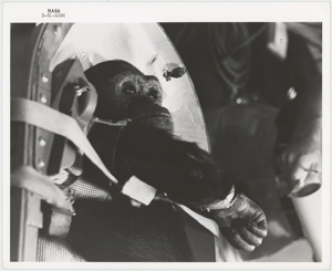 Enos the Chimp Original 'Type 1' Photograph